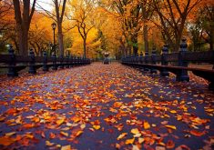 Autumn Road Path Way Leaves Orange 4K Wallpaper