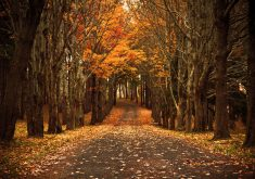 Autumn Road Path Trees Orange Leaves 4K Wallpaper