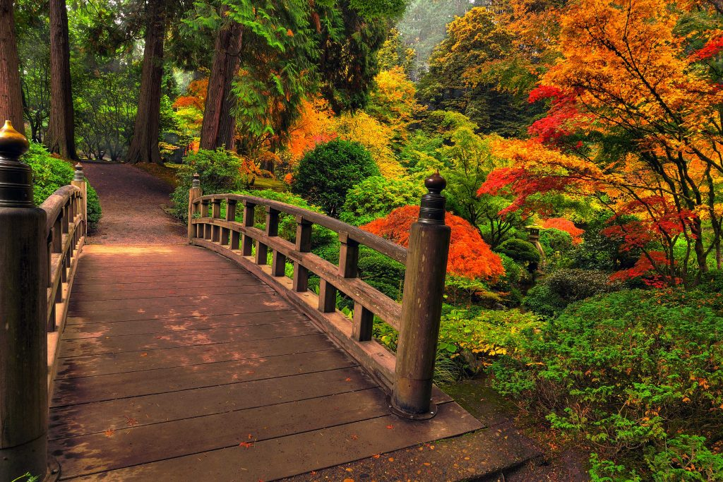 Autumn Trees Red Green Orange Bridge 4K Wallpaper