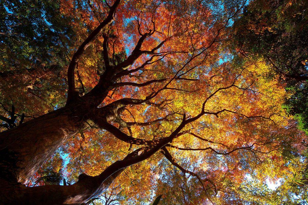 Autumn Trees Orange Yellow Green 4K Wallpaper