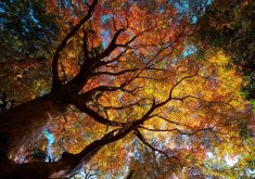 Autumn Trees Orange Yellow Green 4K Wallpaper