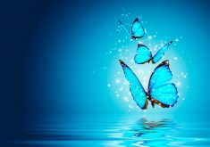 Butterfly Blue Water Magical 4K Wallpaper