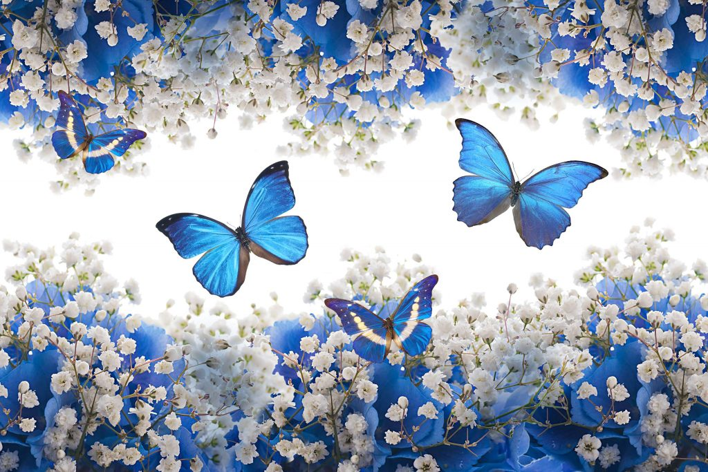 Butterfly Insect Blue Flowers White 4K Wallpaper