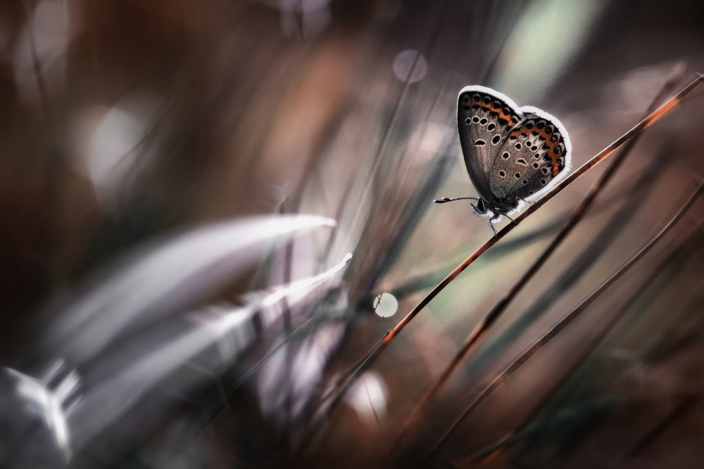 Butterfly Insect Bokeh 4K Wallpaper