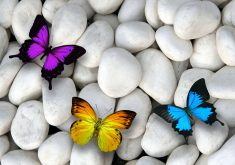 Butterfly Stones White Blue Purple Orange 4K Wallpaper