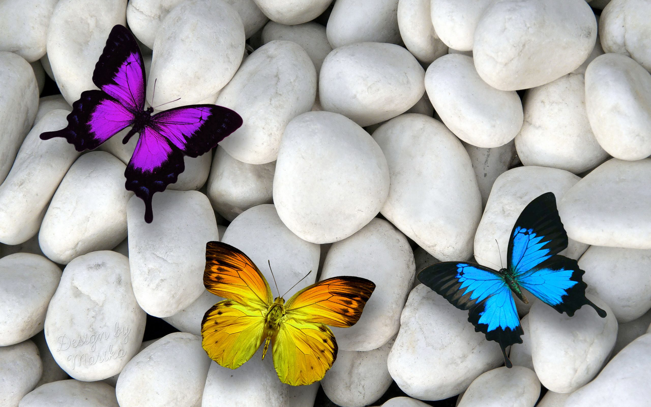 Butterfly Stones White Blue Purple Orange 4k Wallpaper Best Wallpapers