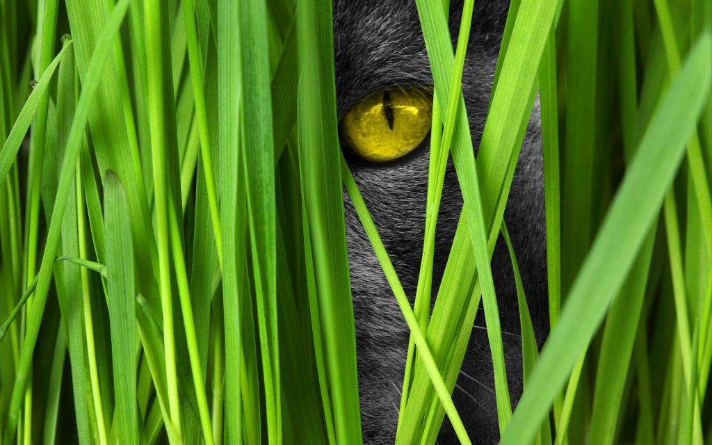 Cat Eye Yellow Black Green Grass 4K Wallpaper