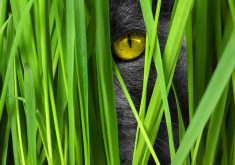 Cat Eye Yellow Black Green Grass 4K Wallpaper