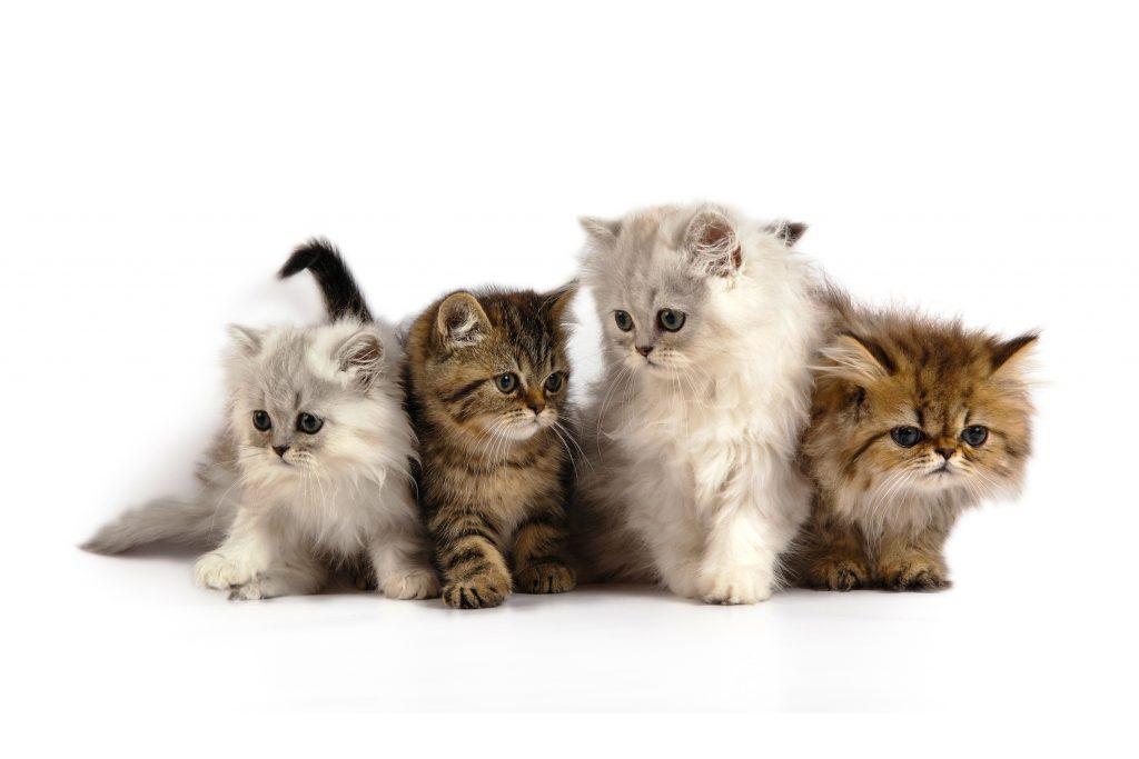 Cats Kittens Cute Fluffy 4K Wallpaper