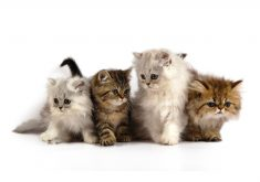 Cats Kittens Cute Fluffy 4K Wallpaper