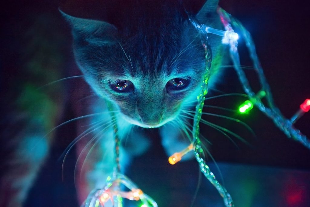 Cute Cat Blue Lights 4k Wallpaper Best Wallpapers