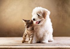 Cute Cat Dog Animal 4K Wallpaper