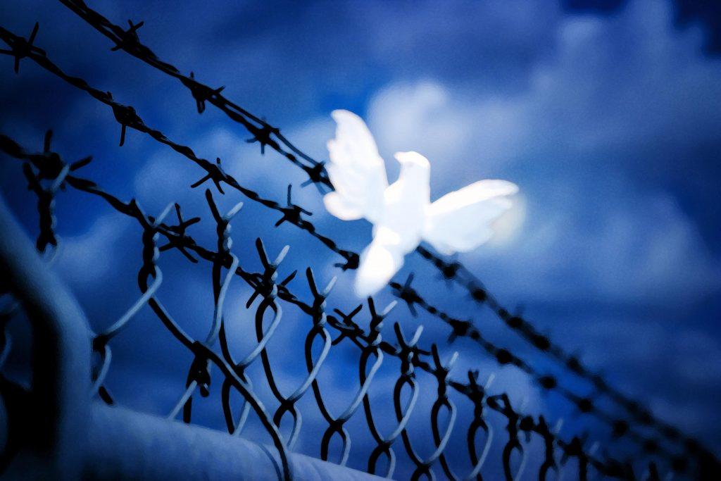 Dove White Bird Blue Fence 4K Wallpaper