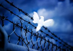 Dove White Bird Blue Fence 4K Wallpaper