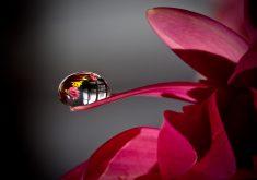 Drop Waterdrop Flower Pink 4K Wallpaper