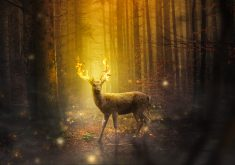 Fantasy Deer Fire 4K Wallpaper