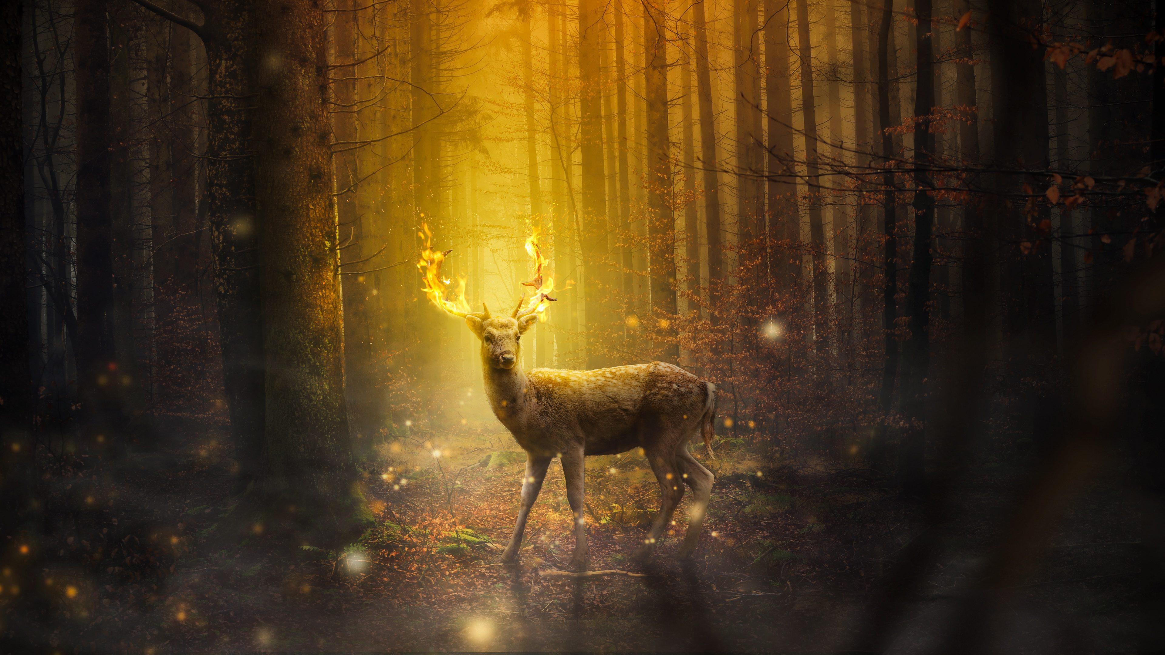 Fantasy Deer Fire 4K Wallpaper - Best Wallpapers