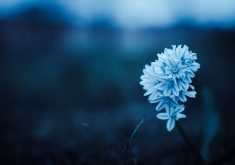 Flowers Blue Closeup 4K Wallpapers