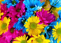 Flowers Colorful Blue Yellow Pink 4K Wallpaper