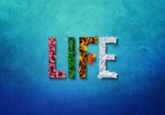 Life Flower Pink Green Snow Blue 4K Wallpaper