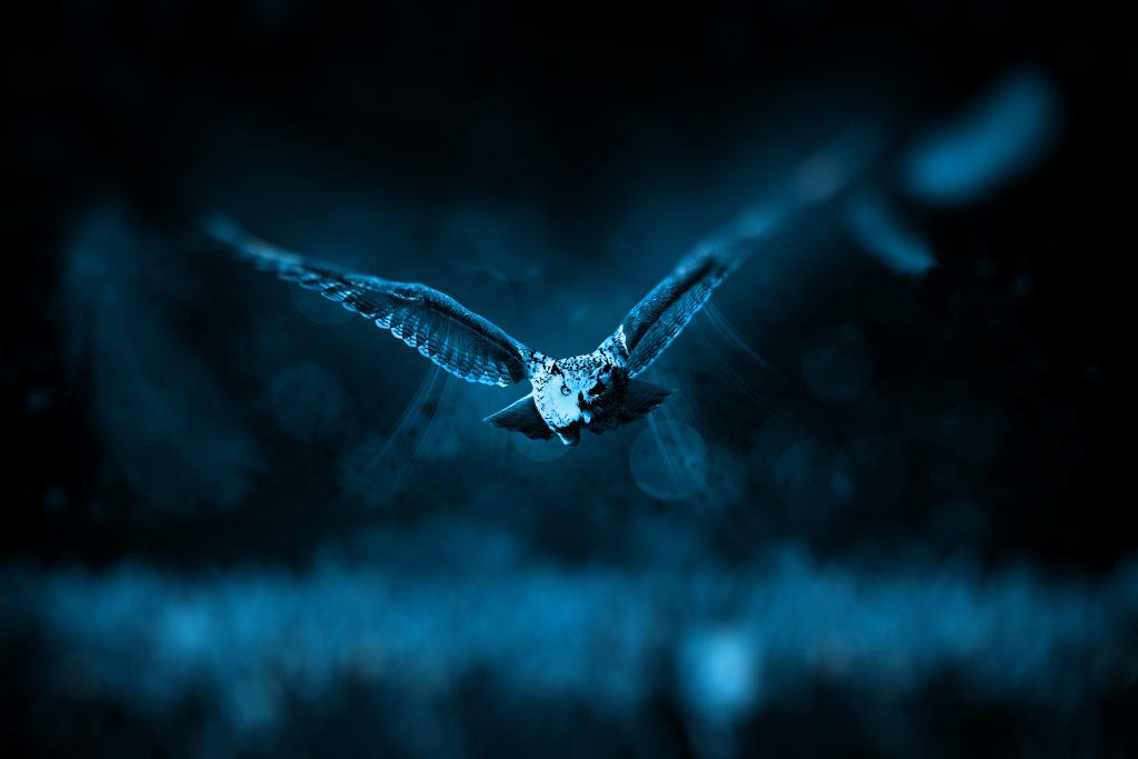 Owl Bird Blue Blur Night 4K Wallpaper