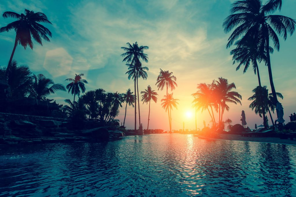 Palm Trees Sunset Orange Sun Green 4K Wallpaper