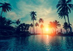 Palm Trees Sunset Orange Sun Green 4K Wallpaper