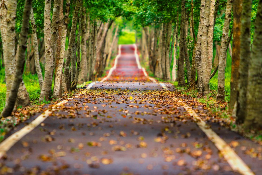 Road Path Way Autumn Trees Green 4K Wallpaper