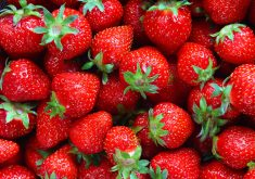 Strawberries Fruits Red 5K Wallpaper