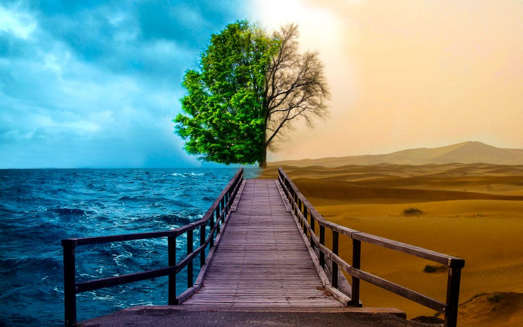 Tree Bridge Desert Ocean Sand Green 4K Wallpaper