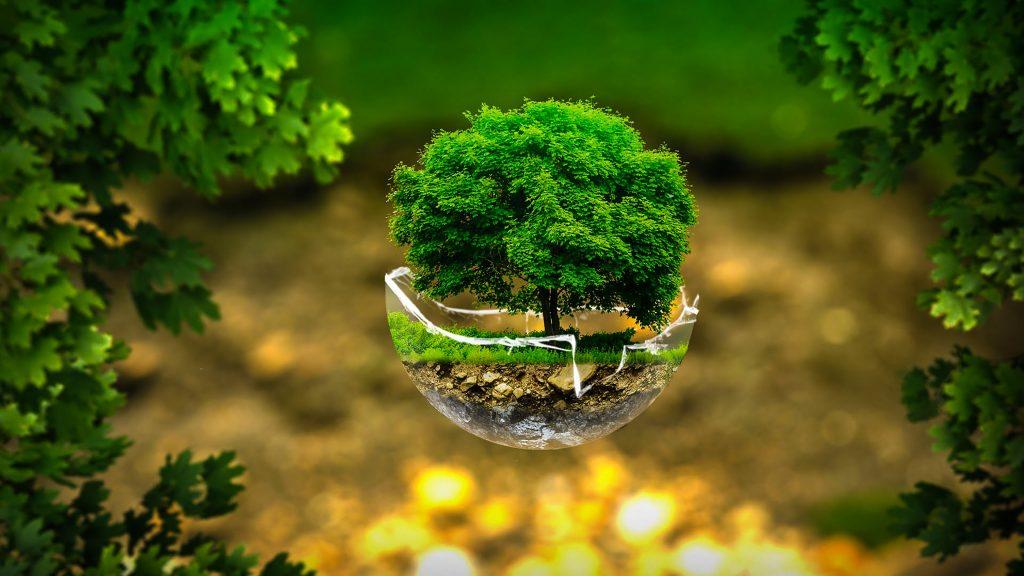 Tree Environment Green Creative 4K Wallpaper
