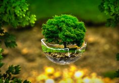 Tree Environment Green Creative 4K Wallpaper