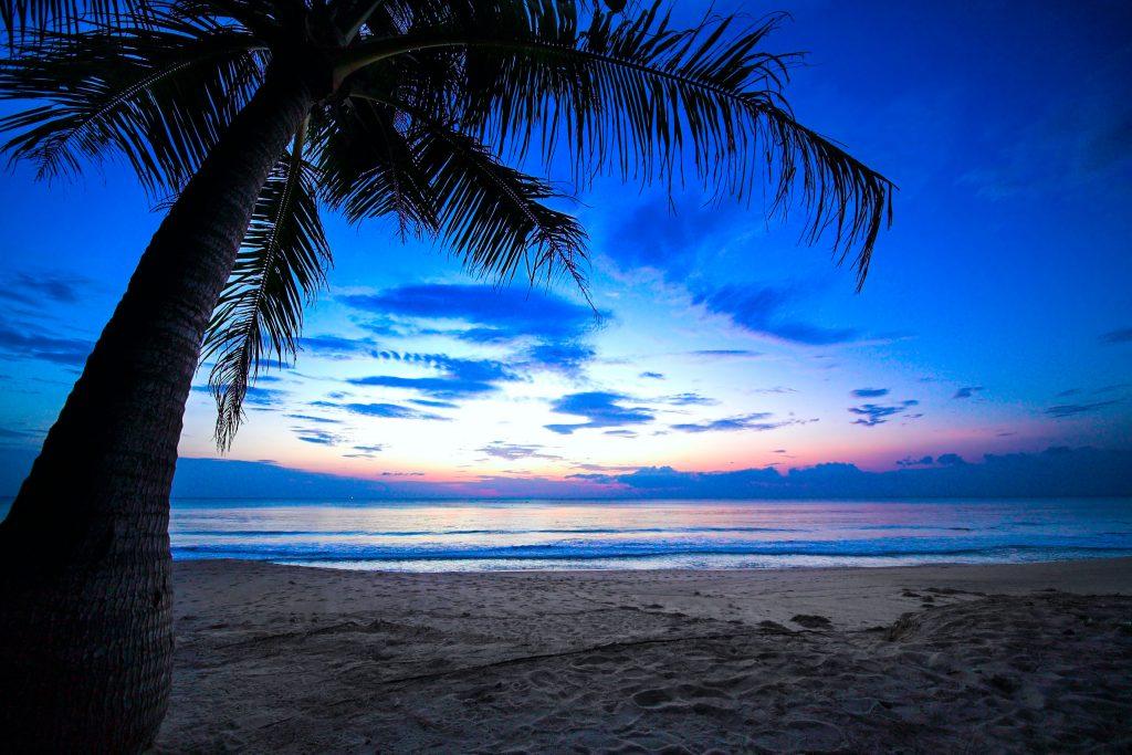 Tree Ocean Water Blue Sky Nature 4K Wallpaper
