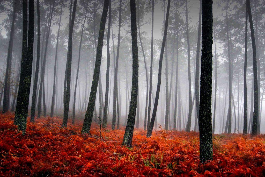 Trees Fog Woods Red 4K Wallpaper