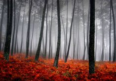 Trees Fog Woods Red 4K Wallpaper