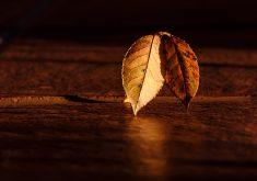 Autumn Leaf Orange Wood 4K Wallpaper