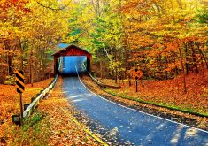 Autumn Trees Leaves Road Path Way Nature 5K Wallpaper