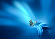 Butterfly Blue Leaf Insect 4K Wallpaper