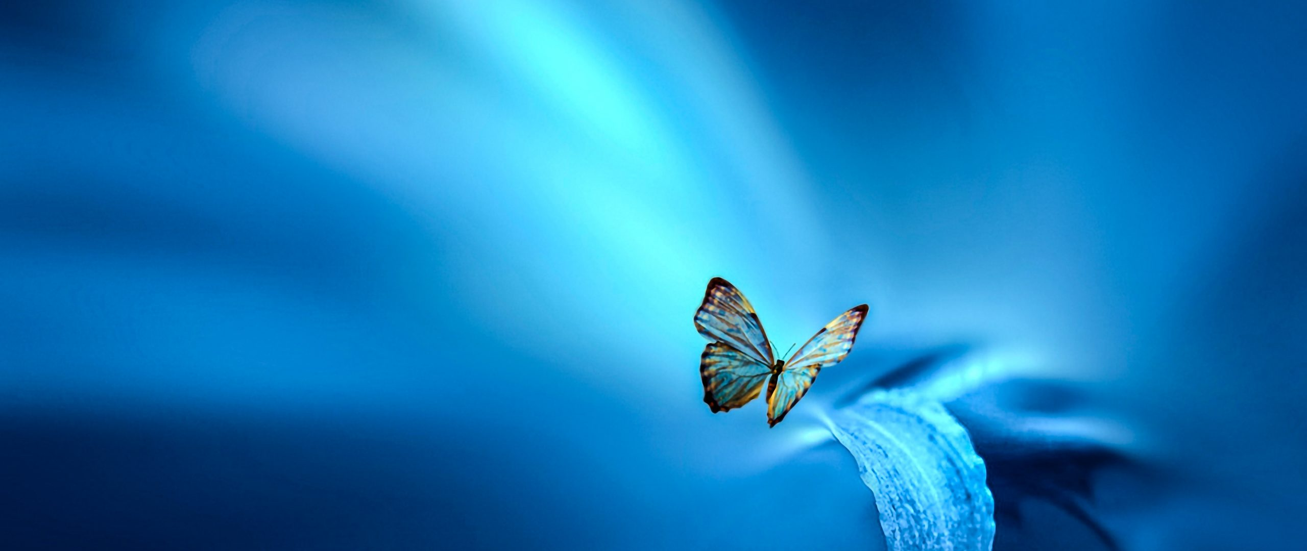 Butterfly Blue Leaf Insect 4K Wallpaper - Best Wallpapers
