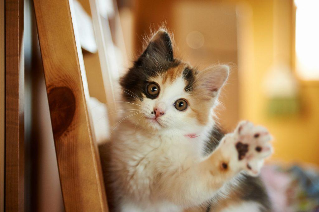 Cat Cute Animal 4K Wallpaper