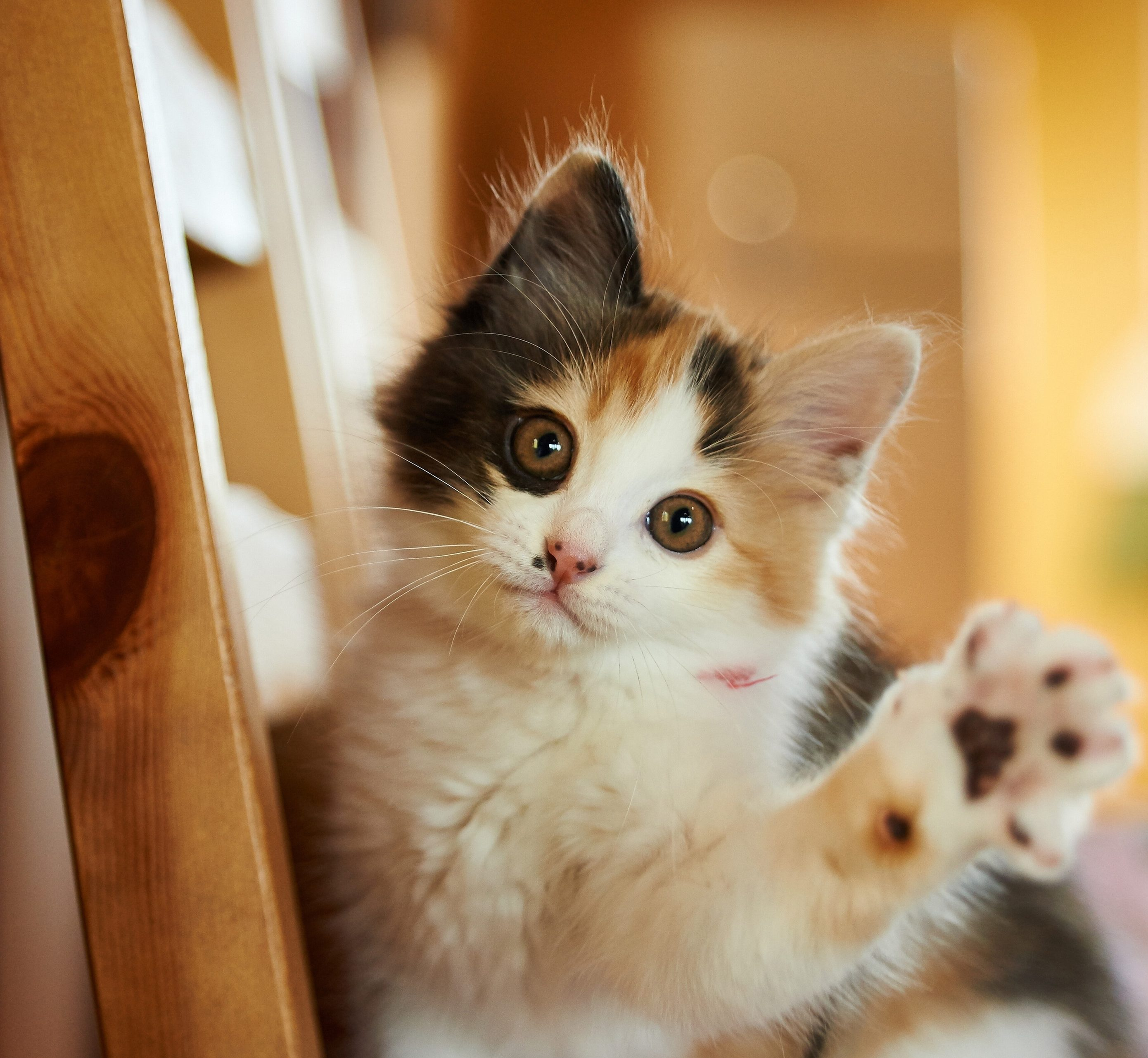 Cat Cute Animal 4k Wallpaper Best Wallpapers