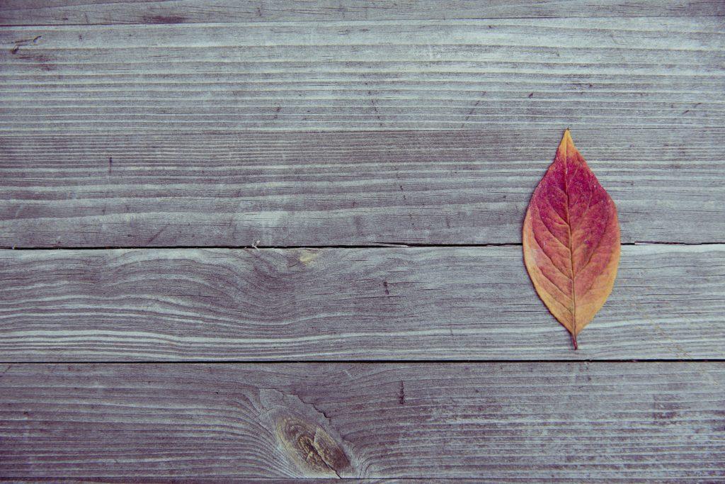 Colorful Fall Leaf Autumn Foliage 5K Wallpaper