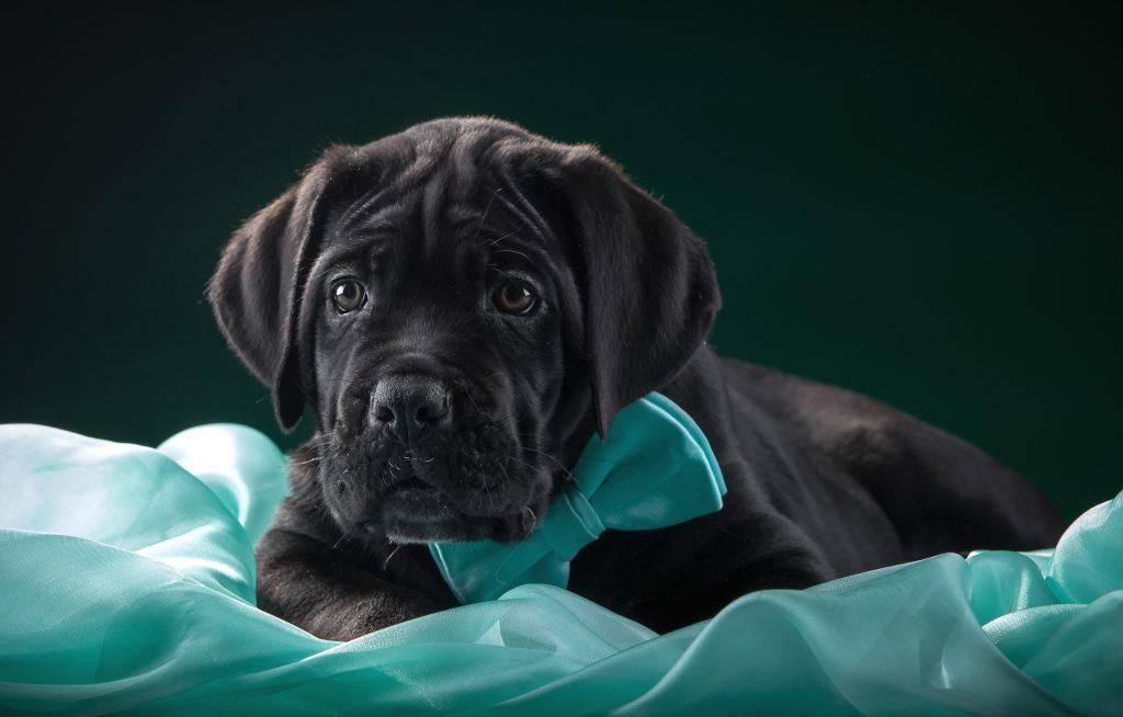 Cute Black Dog 4K Wallpaper