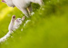 Cute White Cats Grass 4K Wallpaper