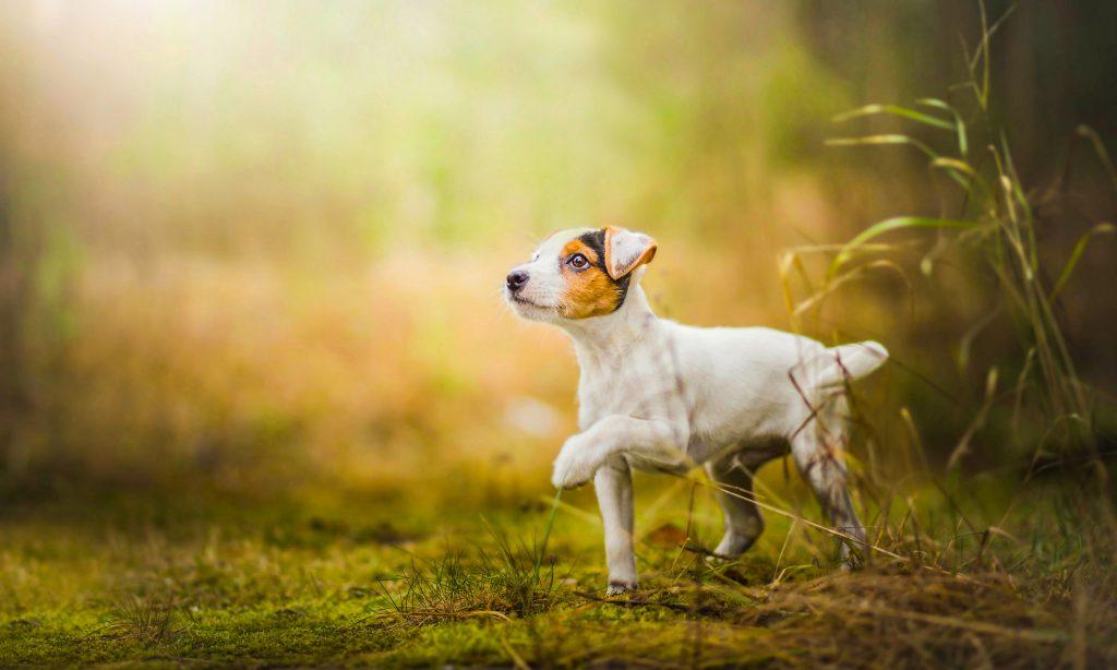 Dog Cute Grass Green 4K Wallpaper