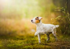 Dog Cute Grass Green 4K Wallpaper
