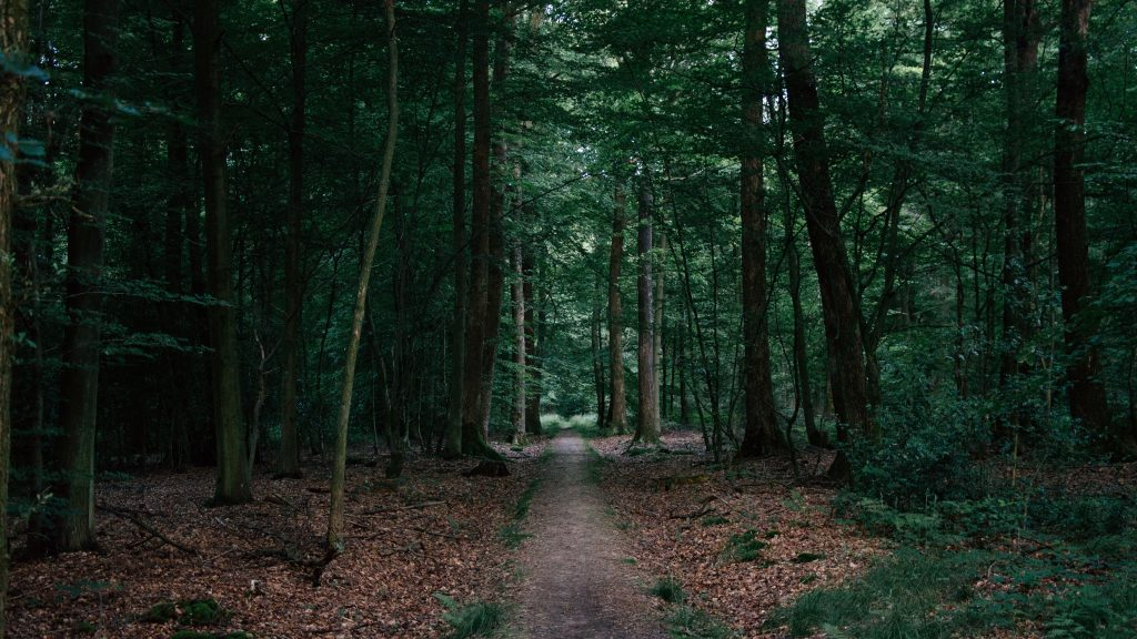 Forest Trees Green Path Way 5K Wallpaper