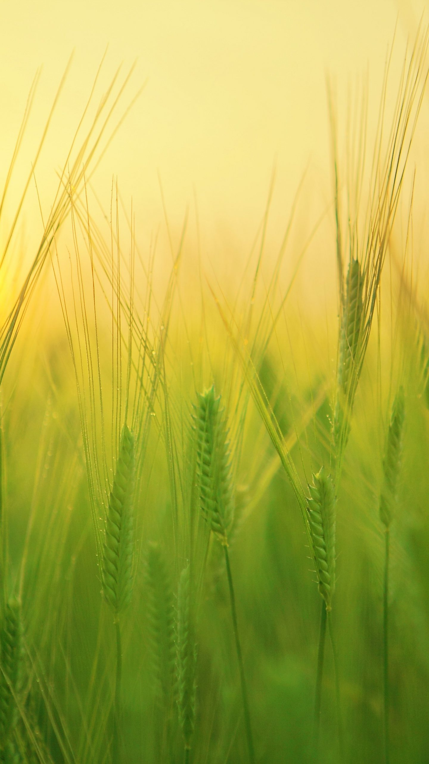 Grass Green Sunset Orange Sky Nature 4k Wallpaper Best Wallpapers