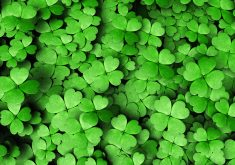 Green Flowers Leafs Pattern 5K Wallpaper