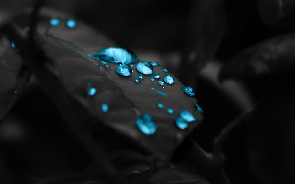 black leaves blue drops 4k wallpaper best wallpapers